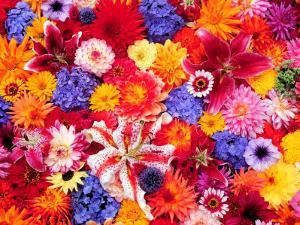 Dahlia, Oriental Lilies, Sunflower, Petunia, Zinnia, Hydrangea Bloom, Sammamish, Washington, USA by Darrell Gulin