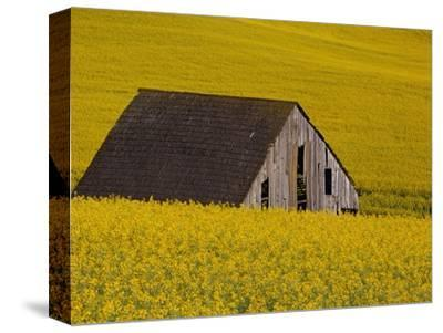 Decaying Barn and Canola Field