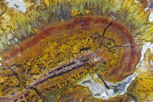 Flame Agate, Sammamish, WA by Darrell Gulin