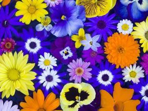 Flowers in Blues and Yellows by Darrell Gulin