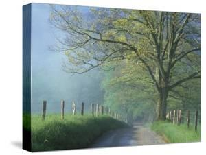 Foggy Road and Oak, Cades Cove, Great Smoky Mountains National Park, Tennessee, USA by Darrell Gulin