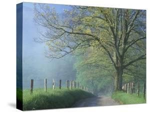 Foggy Road and Oak Tree, Cades Cove, Great Smoky Mountains National Park, Tennessee, USA by Darrell Gulin