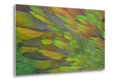 Green Wing Shoulder Design Nicobar Pigeon