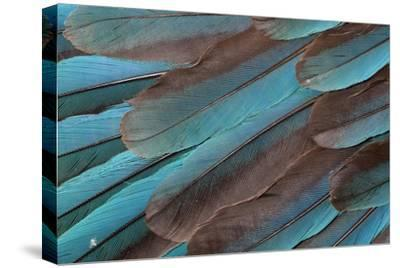 Kingfisher Wing Feathers