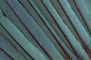 Kingfisher Wing Feathers by Darrell Gulin