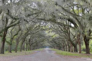 Oak lined lane, Savannah, Georgia by Darrell Gulin