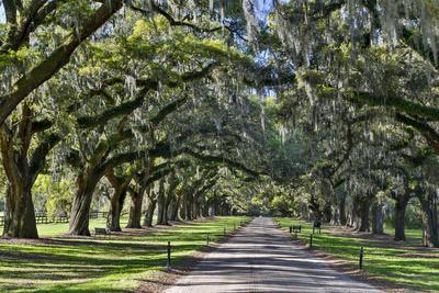 Oak lined road, Charleston, South Carolina