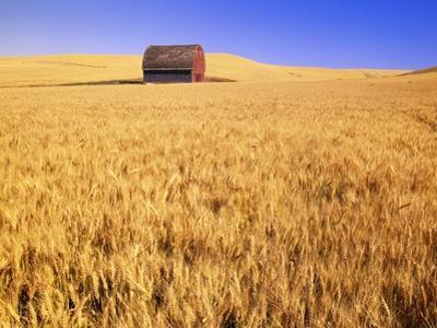 Old Barn in Wheat Field, Eastern Washington