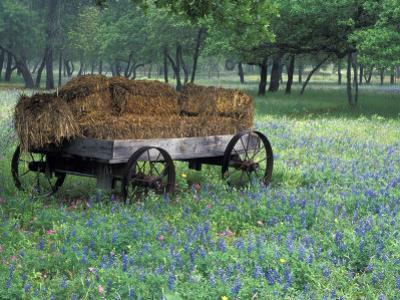Old Wagon and Wildflowers, Devine, Texas, USA by Darrell Gulin