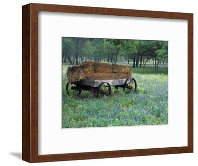Old Wagon and Wildflowers, Devine, Texas, USA