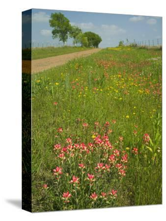 Paint Brush and Dirt Road, Cuero, Texas, USA