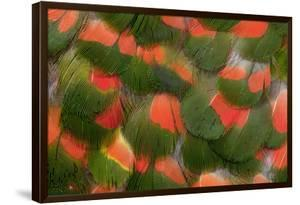 Pattern of Red and Green Feathers by Darrell Gulin