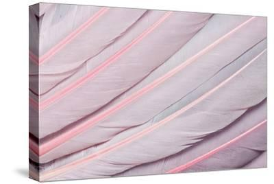 Pink Wing Feathers of Roseate Spoonbill