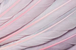 Pink Wing Feathers of Roseate Spoonbill by Darrell Gulin