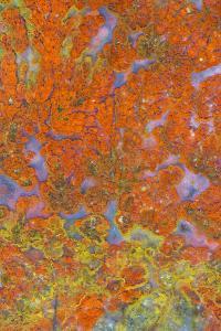 Plume Agate, Sammamish, Washington State by Darrell Gulin