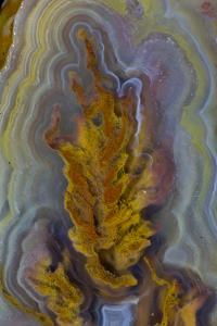Plume Agate, Sammamish, Washington by Darrell Gulin