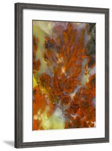 Plume Agate, Sammamish, Washington by Darrell Gulin
