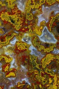 Plume and Moss Design in Agate, Fox Island WA by Darrell Gulin