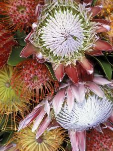 Protea Flower Design, Maui, Hawaii, USA by Darrell Gulin