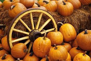 Pumpkins on Display by Darrell Gulin