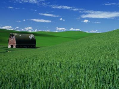 Red Barn in a Wheat Field