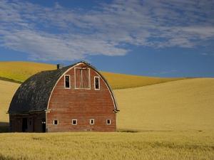 Red Barn in Wheat Field by Darrell Gulin