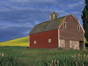Red Barns and Canola Fields, Eastern Washington, USA by Darrell Gulin