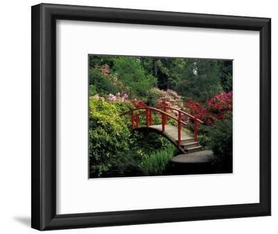 Red Bridge in Springtime, Koybota Gardens, Seattle, Washington, USA