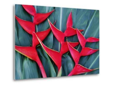 Red Heliconia Flowers