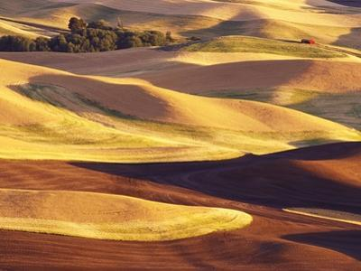 Rolling Wheat and Fallow Fields