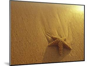 Starfish and Sand at Sunset, Maui, Hawaii, USA by Darrell Gulin