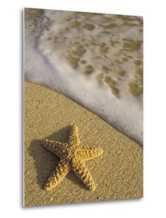 Starfish and Surf of Makena Beach, Maui, Hawaii, USA