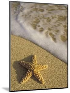 Starfish and Surf of Makena Beach, Maui, Hawaii, USA by Darrell Gulin