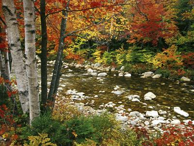 Swift River with Aspen and Maple Trees in the White Mountains, New Hampshire, USA