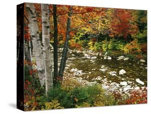 Swift River with Aspen and Maple Trees in the White Mountains, New Hampshire, USA by Darrell Gulin