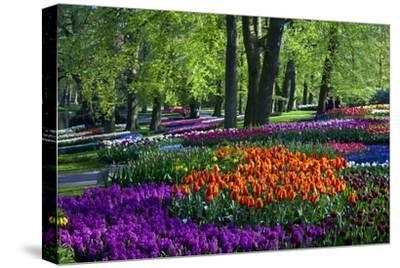 Tulips and Hyacinth in Keukenhof Gardens