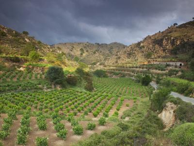 Vineyards in the White Mountains, Crete, Greece