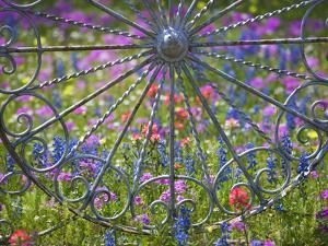 Wheel Gate and Fence with Blue Bonnets, Indian Paint Brush and Phlox, Near Devine, Texas, USA by Darrell Gulin