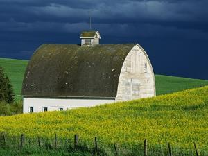White Barn and Canola Field by Darrell Gulin