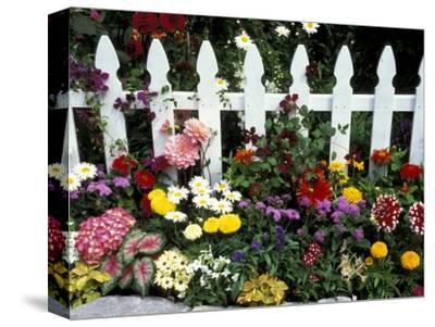 White Picket Fence and Flowers, Sammamish, Washington, USA
