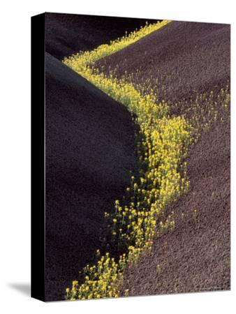 Yellow Flowers in Painted Hills National Monument, Oregon, USA