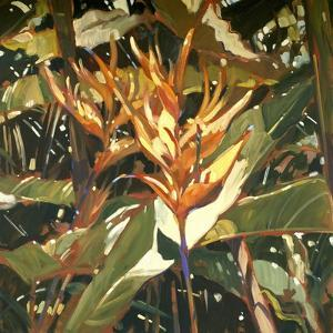 Orange Heleconia by Darrell Hill