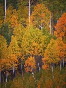 Autumn Trees by Darren White Photography