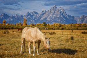 Breakfast in the Tetons by Darren White Photography