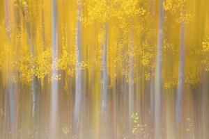 Changing Seasons by Darren White Photography