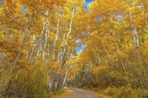 Colors of Fall by Darren White Photography