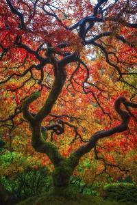 Earthal Tree Alive by Darren White Photography