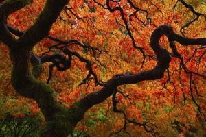 Fall Chaos copy by Darren White Photography
