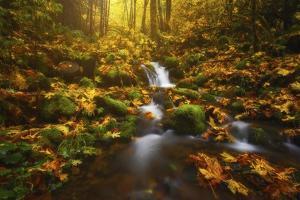 Golden Creek Cascade by Darren White Photography