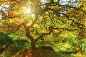 Good Morning Sunshine by Darren White Photography